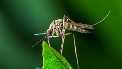 The Latest Zika-style Mosquito Threat: Mayaro Virus