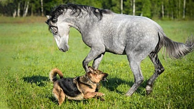 Why Are Mosquitoes a Danger to Dogs, Cats & Horses?