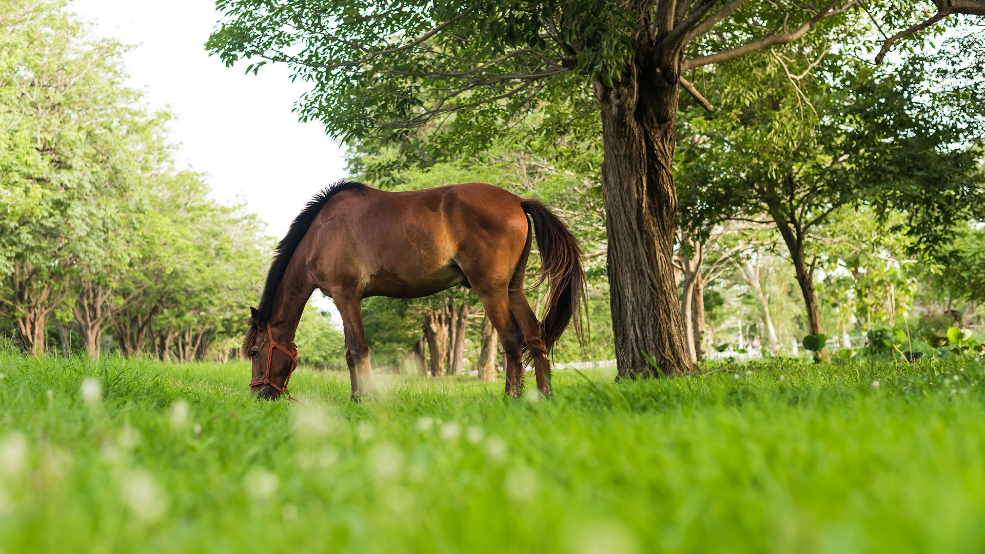 How to Keep Mosquitoes Away from Horses