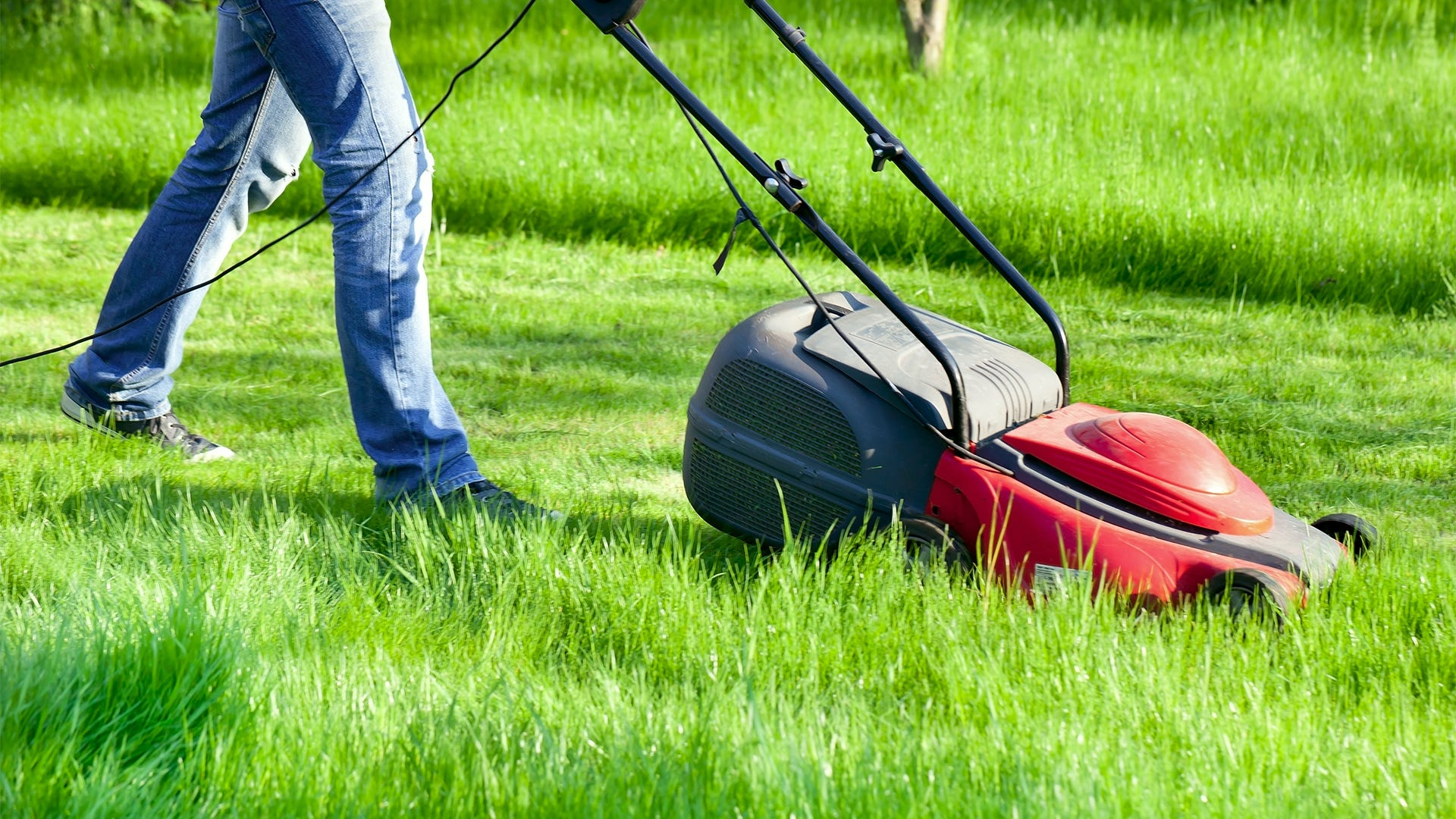 How to Prevent Mosquitoes From Breeding on Your Property