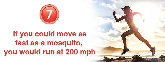 How fast do mosquitoes fly