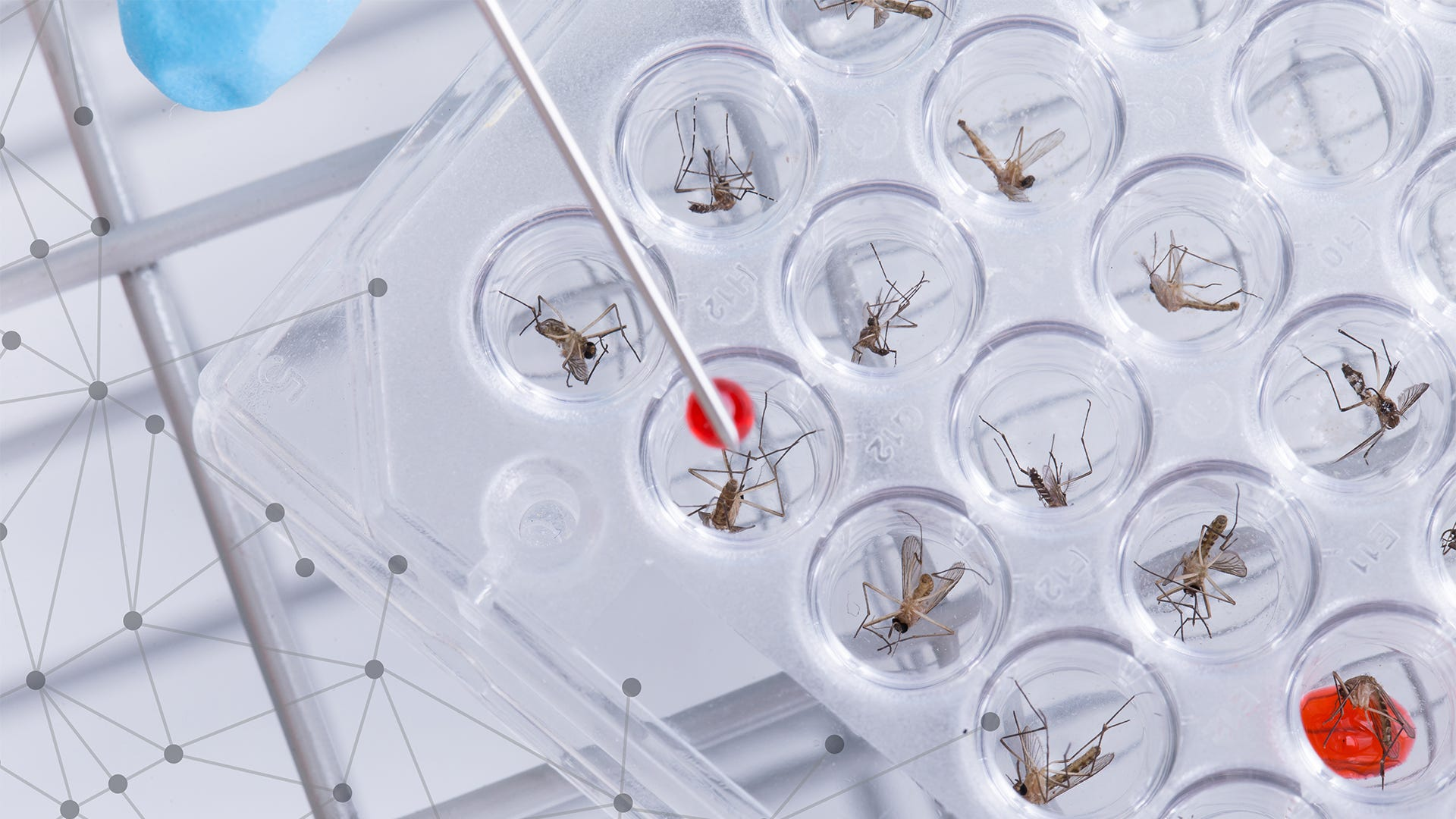 Pros and Cons of Genetically Modified Mosquitoes