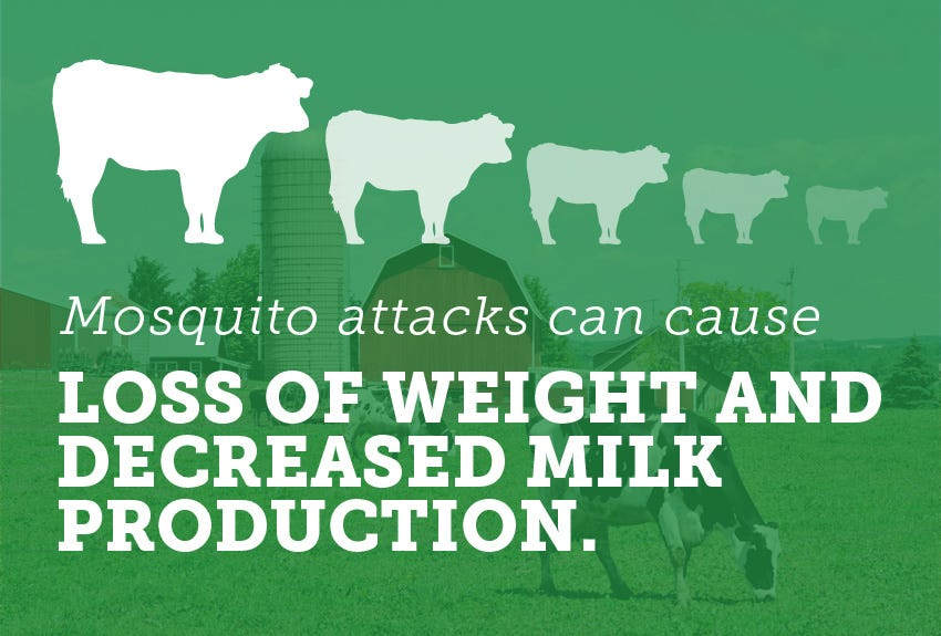 The Ultimate Guide to Mosquito Management on the Farm: Mosquito Control for Cows
