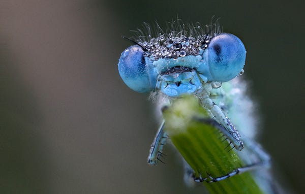 What eats mosquitoes, dragonflies eat mosquitoes