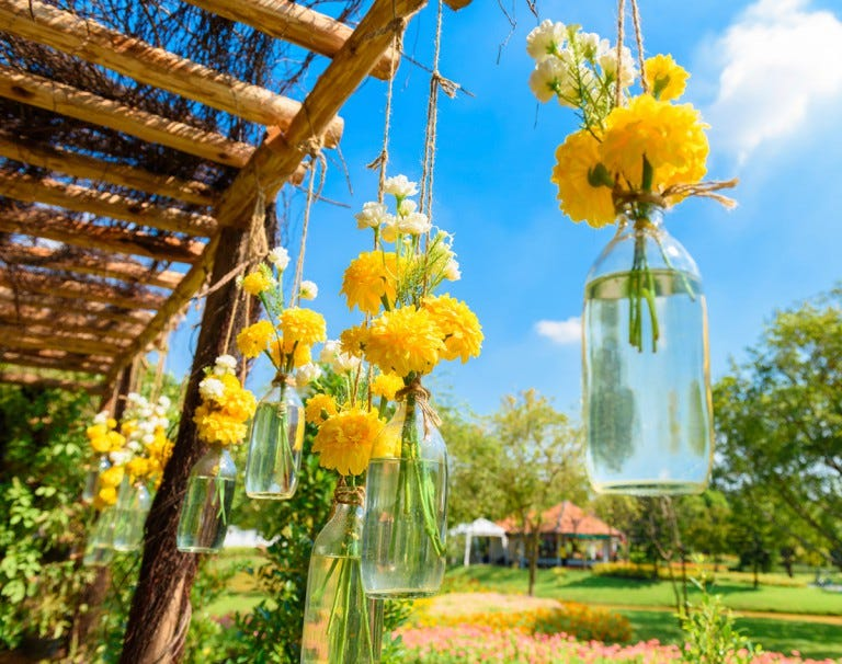 repel mosquitoes with marigolds