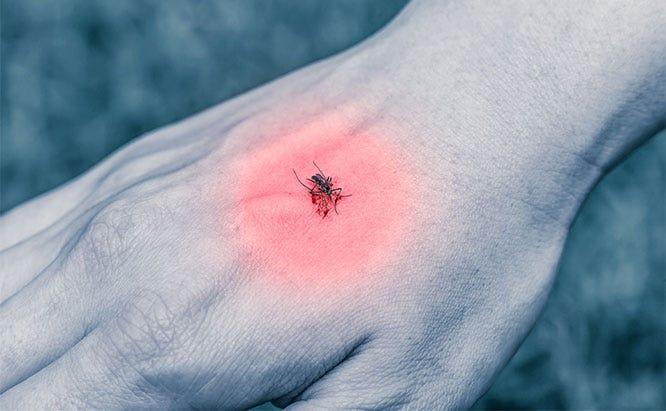 zika mosquito control