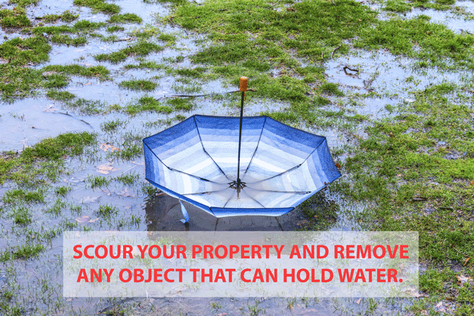 Mosquito flooding dangers