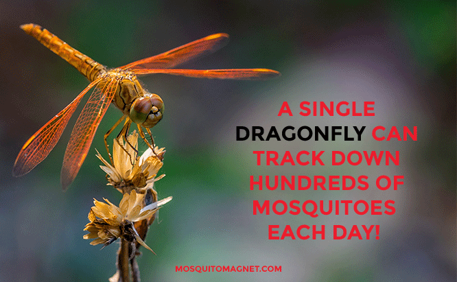 top mosquito killers insects