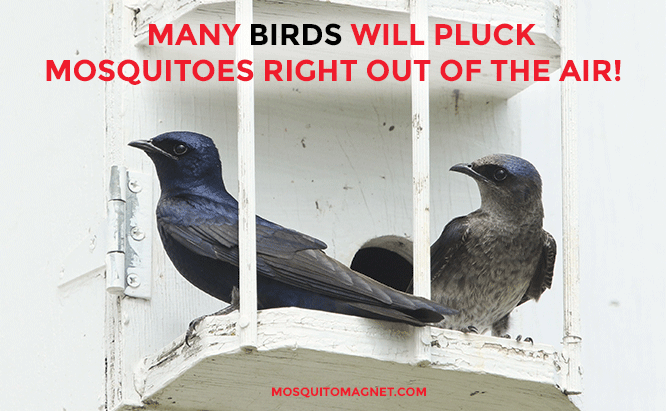 top mosquito killers birds and bats