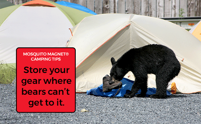 First Time Camping Tips Bears at Campsite