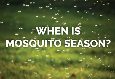 Mosquito Season Is Longer Than You Think