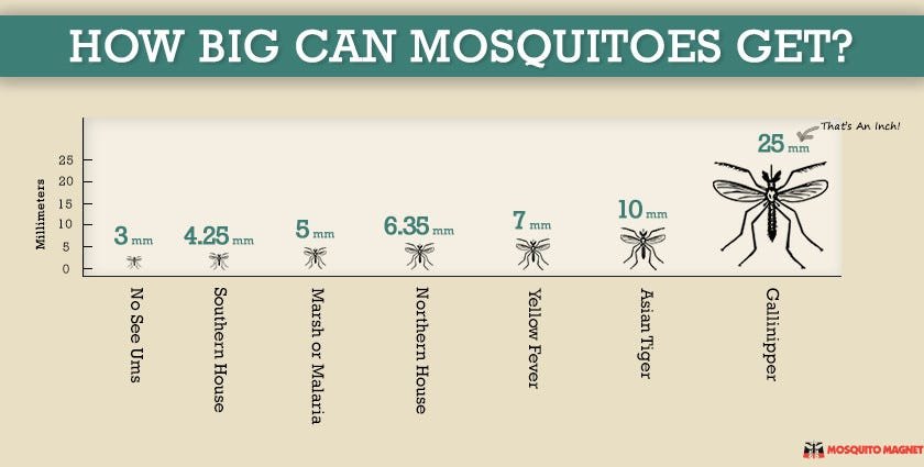 How big can mosquitoes get anopheles mosquito