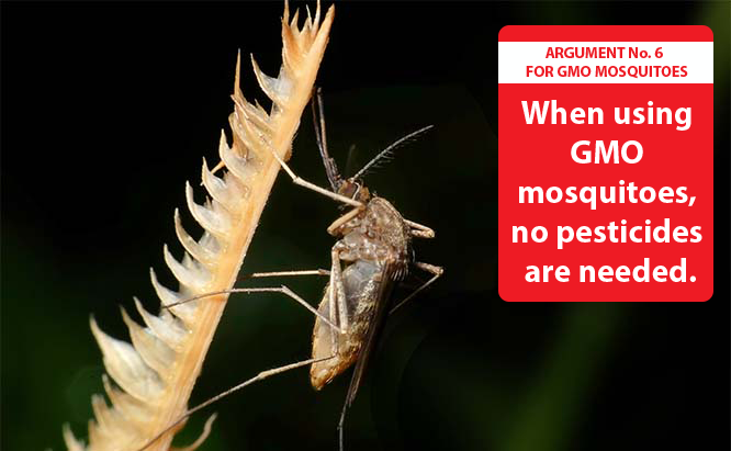 Pros of GMO Mosquitoes